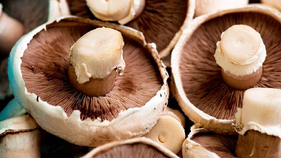 No drugs found in woman's home-grown 'magic mushrooms'